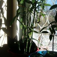 А у меня - букет котов изумительной красы, и, в отличье от цветов, он мяукает в усы. :: Ольга Кривых