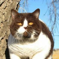 Я-кот! :: Наталья Морозова