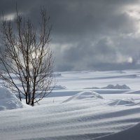 Зима не даром злится, прошла ее пора....... :: Sergey Apinis