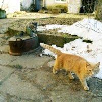 Мартовские коты. :: сергей лебедев