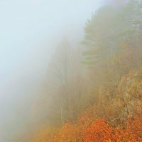 Адыгея. Плато Лаго-Наки. Туман. 2014г. :: Лариса Мироненко