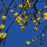 весна пришла, красоту принесла.... :: Михаил Жуковский