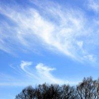 Весеннее небо :: оля san-alondra