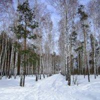 15 марта .Сибирь . :: Мила Бовкун