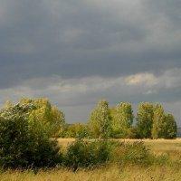 Ветер тучи нагоняет. :: nadyasilyuk Вознюк