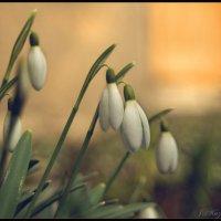 Цветы под окном. :: Елена Kазак
