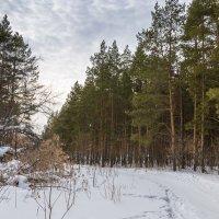 Мартовский лес :: Любовь Потеряхина