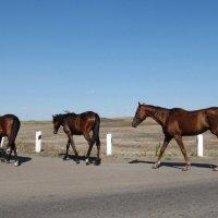 Башкирские лошади. :: Вера Щукина