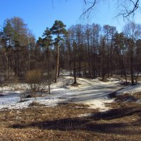 Img_3240 - Дождались весеннего солнца! :: Андрей Лукьянов