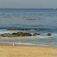 пляж Монтерей :: Алексей Меринов