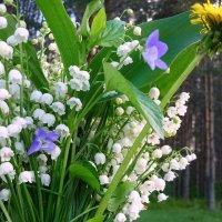 Весенний букет :: Павлова Татьяна Павлова