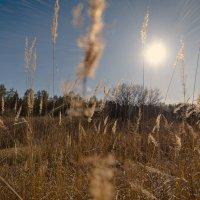 Мартовское солнце :: Андрей Дорохин