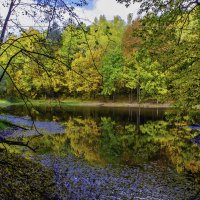 Лесное озеро :: Виктор