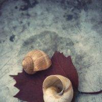 On the shore of autumn :: Paul B.