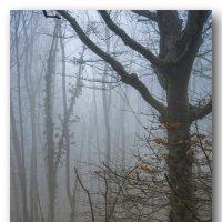 Туманный лес :: Игорь Кузьмин