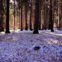В мартовском лесу :: Татьяна Ломтева