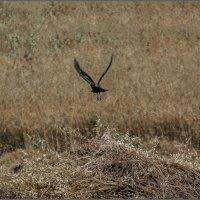 «Черный ворон» :: Shmual Hava Retro