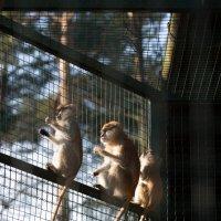 Zoo :: Gotardo Ro