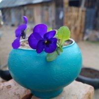 цветы :: владимир володенок