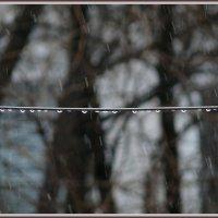 А за окном то дождь, то снег... :: Татьяна и Александр Акатов