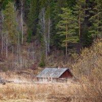 у леса на опушке :: зоя полянская