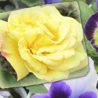 Краски мая... :: Тамара (st.tamara)
