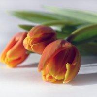 Тюльпаны :: Галина Galyazlatotsvet