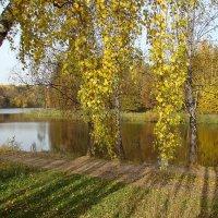 Золотая осень в Салтыковке. :: юрий
