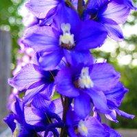 Цветы :: Екатерина Сокова