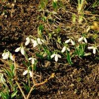 Весна идет, весне -- дорогу! :: Svetlana27