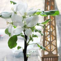 Мартовское безумие яблоньки :: Ирина Томина