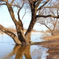 К воде сползают берега... :: Лесо-Вед (Баранов)