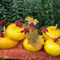 Жёлтый урожай. :: юрий