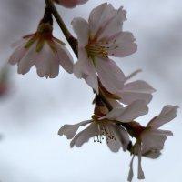 Весна идет... :: Александр Грищенко