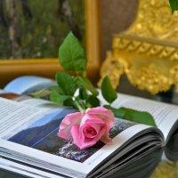 Розы :: Larisa Simonenkova