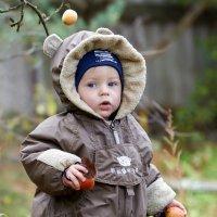 Охотник за яблоками... :: Сергей Цвиров