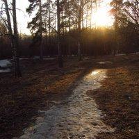 IMG_3601 - Снимаю навстречу солнцу :: Андрей Лукьянов
