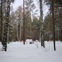 Лесные красоты . :: Мила Бовкун