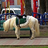 а пони тоже кони... :: Александр Корчемный