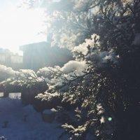 sun and tree :: Настенька Сорокина
