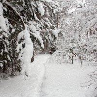 Зимняя сказка! :: Андрей Вычегодский