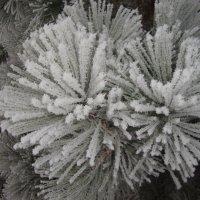зимняя астра :: ли мирон