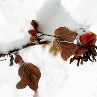 последний снег весны :: Евгений Фролов