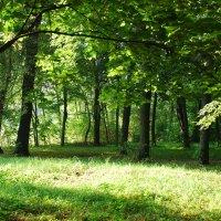 Старый парк :: Николай Варламов