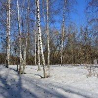 Март :: Ната Волга