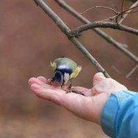 в руке :: Андрей С
