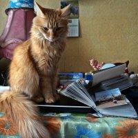 Сохранить как... :: Елена Федотова