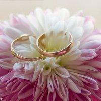 Обручальные кольца на цветущей хризантеме. :: ВЯЧЕСЛАВ КОРОБОВ