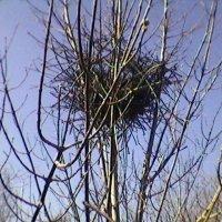 Гнездо :: Миша Любчик