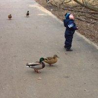 IMG_3703 - Юный кормилец птиц :: Андрей Лукьянов